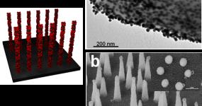 Au nanorods coated CNTs