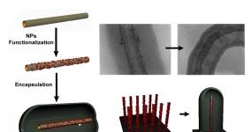 Nano-micro reactors based on encapsulated CNTs