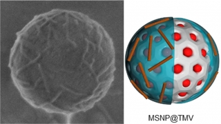 Tobacco Mosaic Virus-Functionalized Mesoporous Silica Nanoparticles, a Wool-Ball-like Nanostructure for Drug Delivery